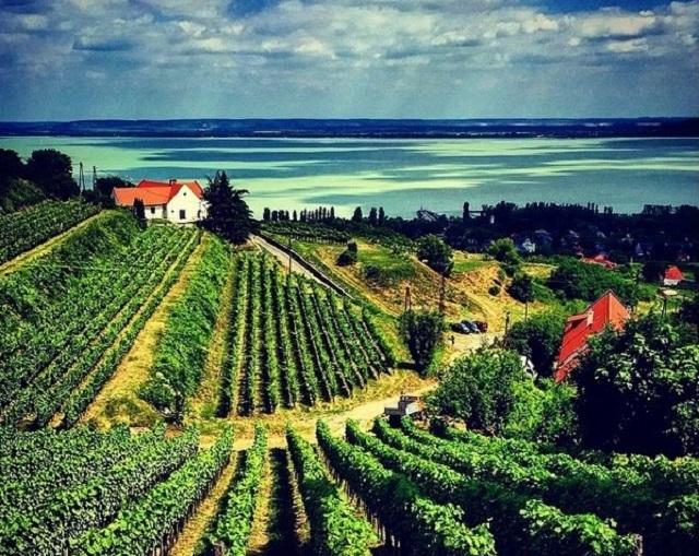 Mezi lákadly tohoto regionu patří hlavně vinařství.