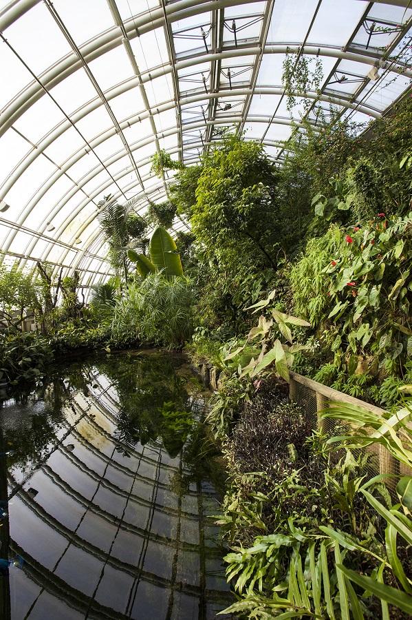 Štědrý den ve skleníku Fata Morgana, foto Botanická zahrada Praha