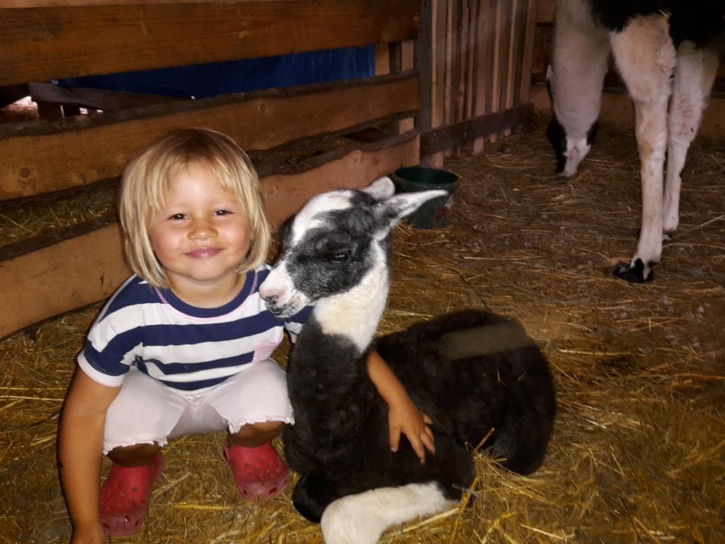 Děti se mohou radovat pohledem na zvířátka v minizoo, pohladit lamy nebo se povozit na koníkovi.