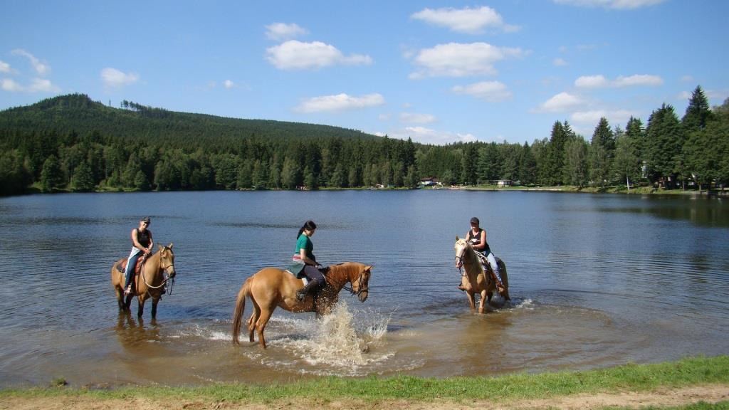 Milovníci koní mohou vyzkoušet své jezdecké schopnosti, foto hotel Podlesí