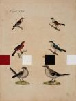 Ptačí partitura, 2008, akryl, tisk, papír, 28,5 x 27,5 cm, foto GHMP