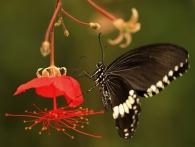 Obdivujte krásu létajících exotických motýlů ve skleníku Fata Morgana. Foto Václava Felixová
