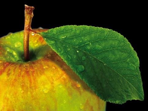 Zdravá strava a změna stravovacích návyků pod vedením profesionálů