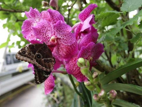 Trojská botanická zahrada zve na výstavu tropických motýlů. Foto Botanická zahrada Praha