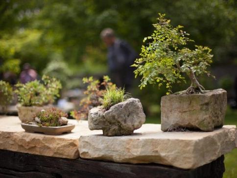 Trojská botanická zahrada připravuje výstavu bonsají. Foto Botanická zahrada Praha