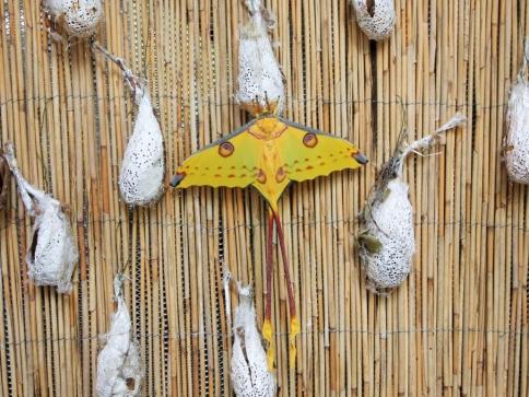 Nový motýlí krasavec čeká na váš obdiv, foto Botanická zahrada Praha Troja