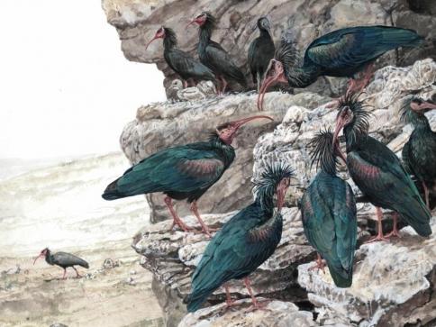 Výstavu ilustrací Pavla Procházky spatříte na loveckém zámku Ohrada, foto NZM