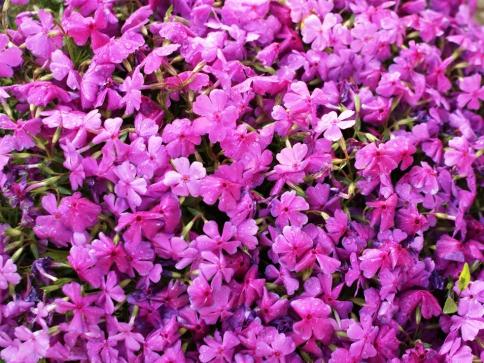 Objevte kouzlo květin v krásném prostředí města Kroměříže