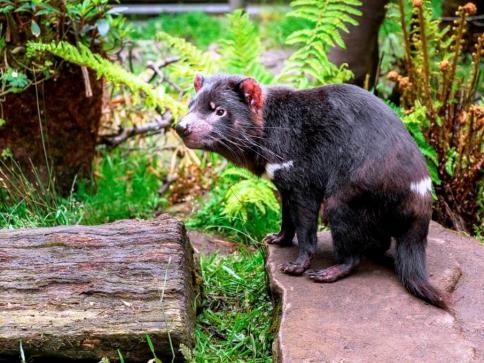 V Zoo Praha začala stavba expozice australské fauny. Foto: Jaroslav Šimek, Zoo Praha