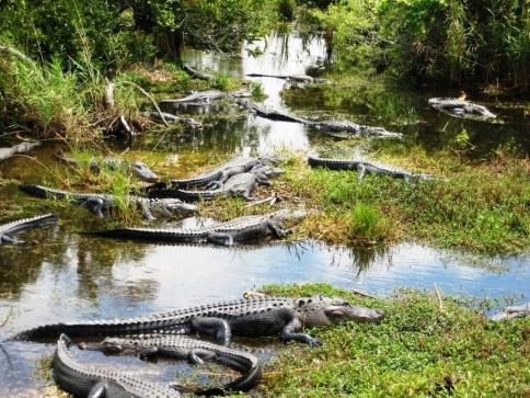 Miami je rájem cestovatelů, foto: Národní park Everglades, Florida