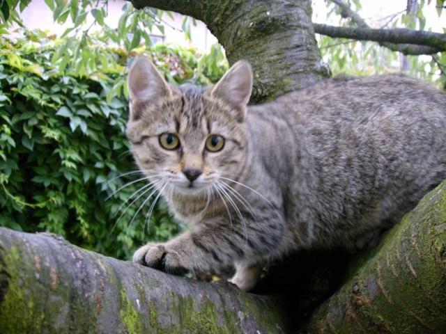 1. Májovka v Praze: umísťovací výstava opuštěných koček a psů, foto Praha Press