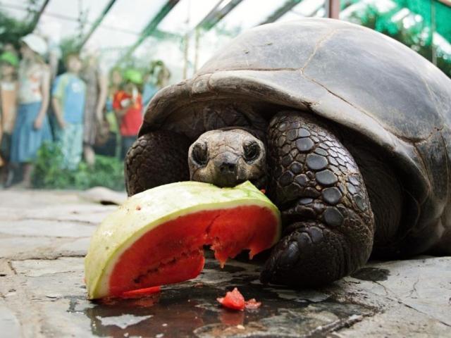 Obyvateli Pavilonu velkých želv jsou želvy obrovské a sloní, dále pak varani a malé druhy želv, foto Tomáš Adamec, ZOO Praha