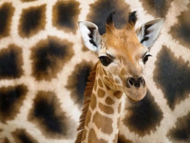 Od počátku se zde narodilo přes 80 mláďat, foto Tomáš Adamec, Zoo Praha
