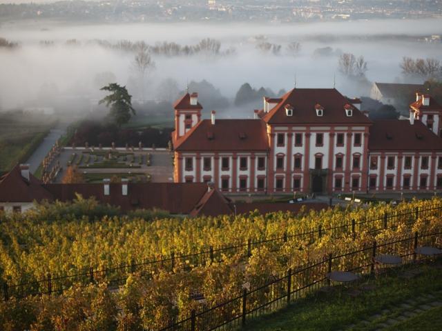 Pozvánka ke slavnostnímu otevírání Svatomartinského vína na vinici sv. Kláry, foto M.Štáfek