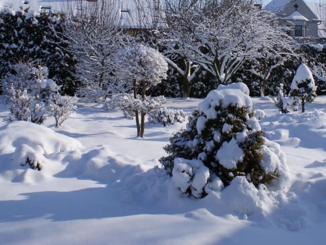 Zahrada v prosinci - zazimování zahrady, foto Praha Press