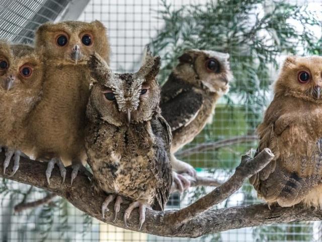 Výrečcci filipínští jsou v rámci Evropy k vidění pouze v pražské zoo. Foto Petr Hamerník, Zoo Praha