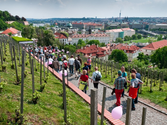 Svátek růžových vín zahájí novou sezonu degustací pod širým nebem, foto Vinařský fond
