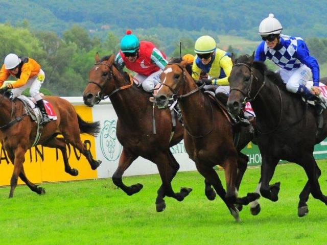 Královský sport nejrychlejších koní v Conseq Parku Velká Chuchle, foto TMM s.r.o.