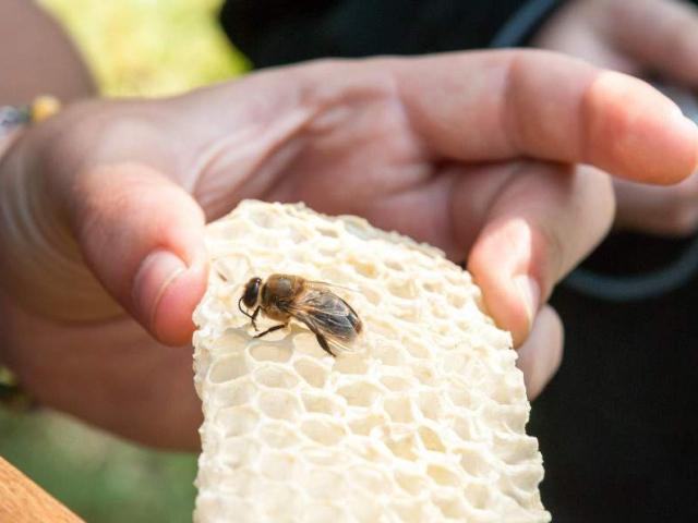 Lesní med je nejlepší, v Praze se dá koupit přímo u zdroje. Foto Lesy hl. m. Prahy