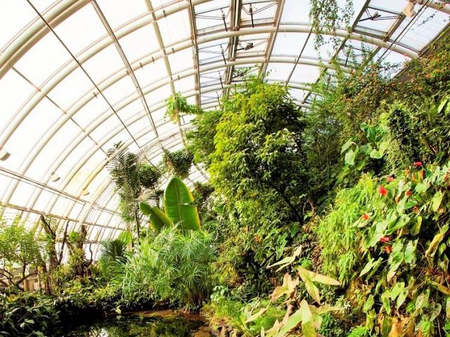 Příjemný chládek trojské botanické zahradě láká návštěvníky. Foto Botanická zahrada Praha