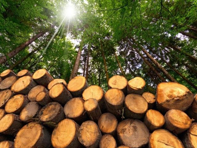 Lednový veletrh FOR PASIV doplní nově projekt Cesty dřeva, foto PVA EXPO, a.s.