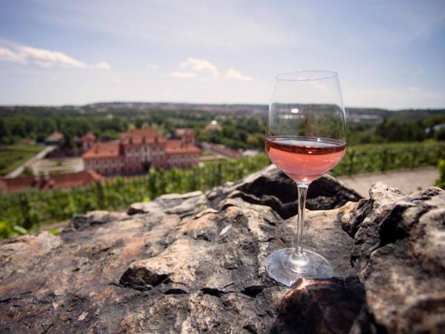 Udělejte si čas na degustaci vín z vinice sv. Kláry. Foto Botanická zahrada Praha