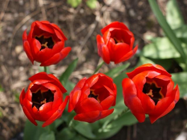 Jaro v zahradě má svá pravidla. Foto Praha Press