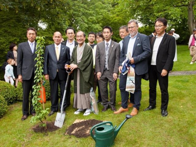Jako symbol partnerství Prahy a Kjóta vysadil kjótský primátor meruňku japonskou. Foto Botanická zahrada Praha