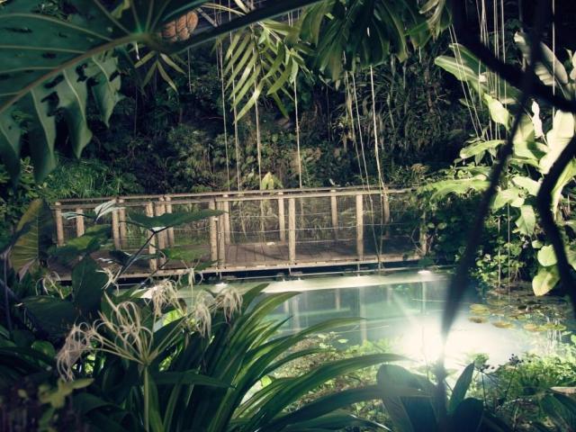 Džungle, která nespí. Foto Botanická zahrada Praha