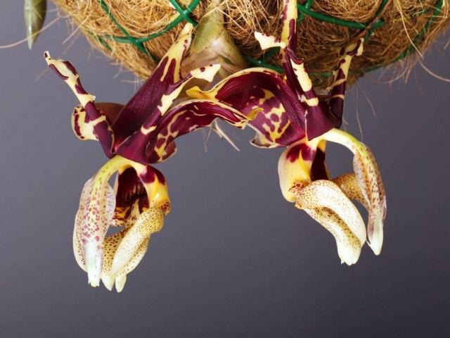 Botanická zahrada v Troji zve na nejočekávanější výstavu tohoto roku – výstavu orchidejí. Foto Botanická zahrada Praha