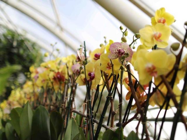 Botanická zahrada v Troji zve na výpravu za klenoty tropických pralesů, foto Botanická zahrada