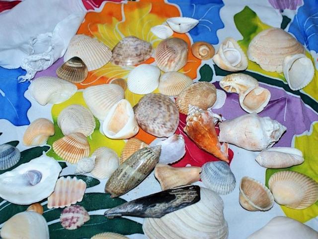 Dejte si pozor na dovoz korálů, lastur a mušlí, foto Stanislava Nopová