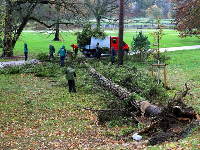 V pražských lesích probíhá likvidace škod po velkém větru, foto Lesy Praha
