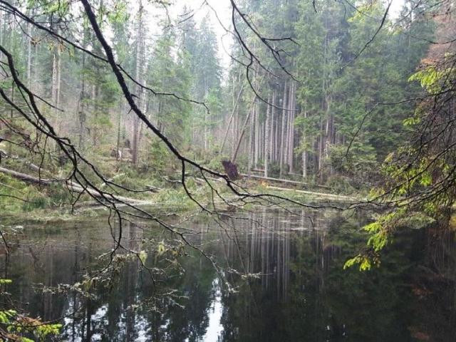 Boubínský prales je opět zčásti přístupný veřejnosti, foto: Národní park Šumava