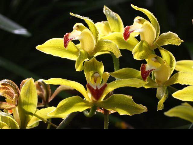 Podivuhodné orchideje vás zavedou do Asie, foto: Botanická zahrada Praha.
