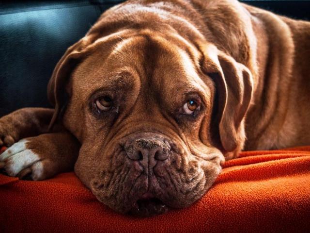Milovníci a chovatelé psů budou mít svůj svátek, foto: mike59, pixabay.com