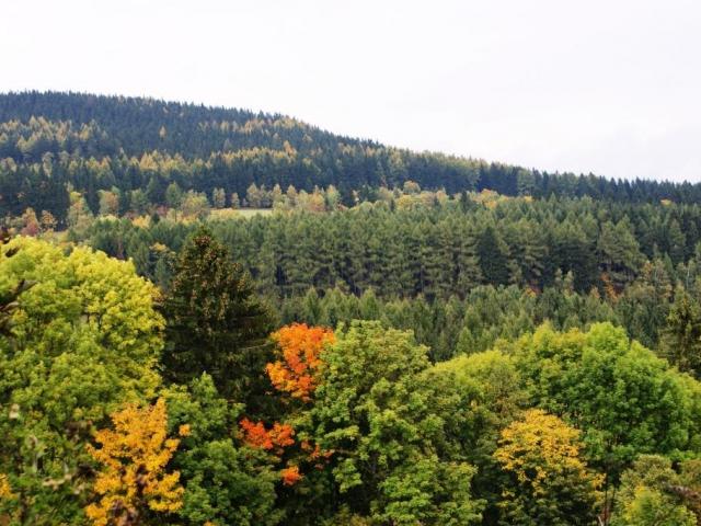 Nechte se provést lesem na výstavě RecykLES, ilustrační foto: Praha Press