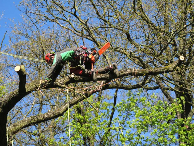 O bezpečné procházky Kunratickým lesem se starají arboristé, foto: Lesy Praha