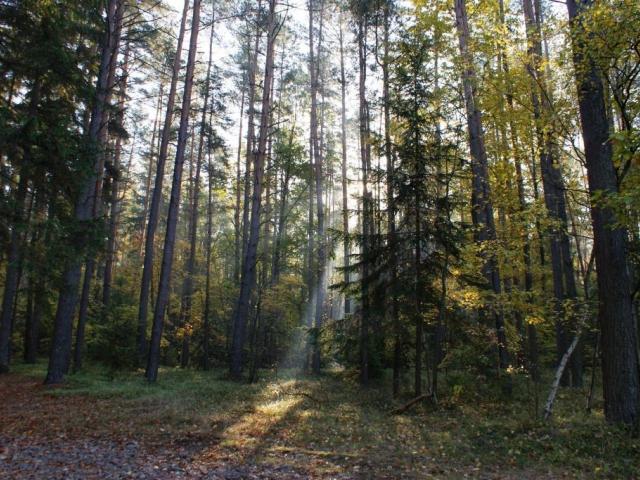 Plošný zákaz úmyslných těžeb dřeva zlikviduje nestátní vlastníky lesů, foto: Stanislava Nopová