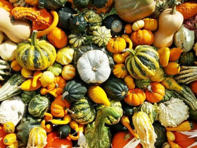 Zažijte pohádkový podzim v Troji, foto: botanicka.cz