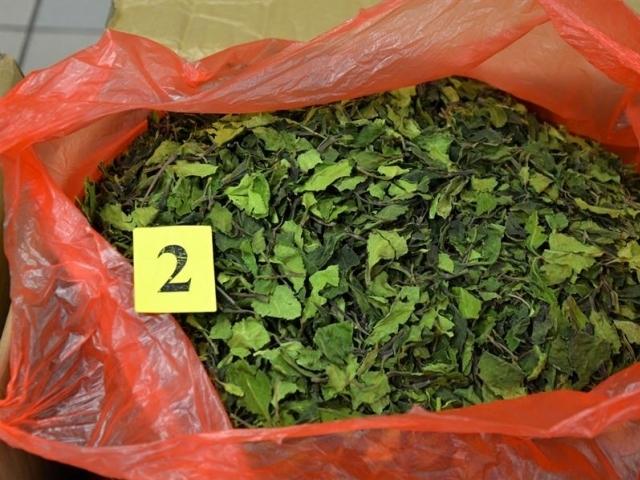 Poštovní zásilky obsahovaly 40 kg Katy jedlé, foto: Celní úřad Praha Ruzyně