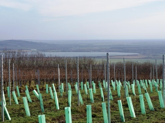 Nad vinicemi začnou létat drony, foto: Praha Press