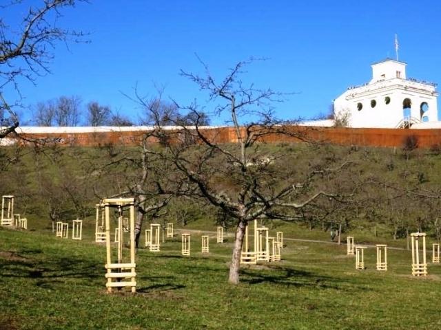 V Seminářské zahradě pokvetou nově vysazené třešně, foto: MHMP